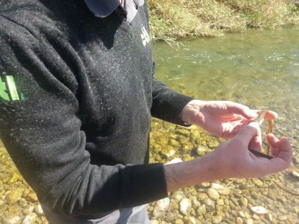 Riba-roja inicia la campaña de prevención anual contra las plagas de mosquitos