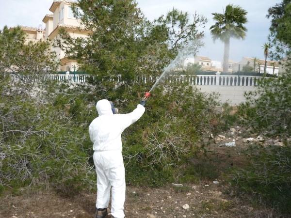 Emergencia Climática intensifica los tratamientos contra la procesionaria del pino ante el incremento de las temperaturas