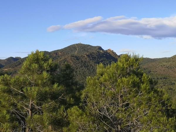 En marxa el Pla d'Ordenació Forestal a Serra