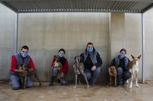 """La 17ª edición del Desfile de perros abandonados A.U.P.A y BIOPARC será """"virtual"""""""