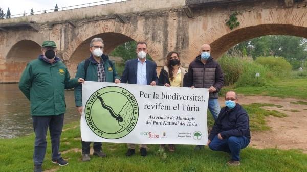 La Plataforma de la Anguila y la Asociación de Municipios del Túria reclaman la construcción de un canal ecológico que garantice la supervivencia