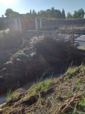 L'Ajuntament de Llíria reclama a la CHJ la neteja dels canals per a evitar inundacions en futurs casos de DANA