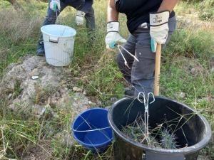 El Ayuntamiento de Lliria retira cerca de 300 kilos de residuos vegetales en la primera semana de los trabajos de eliminación de cactus