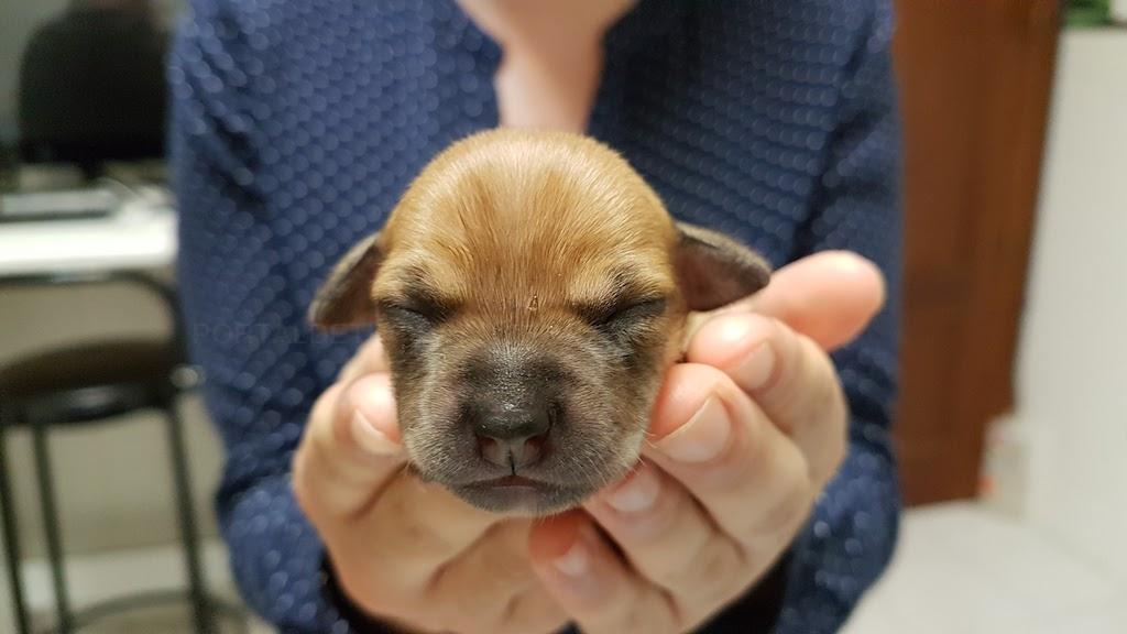 servicios veterinarios en tres cantos