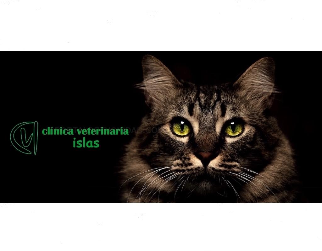 veterinarios en tres cantos, veterinarios en colmenar viejo