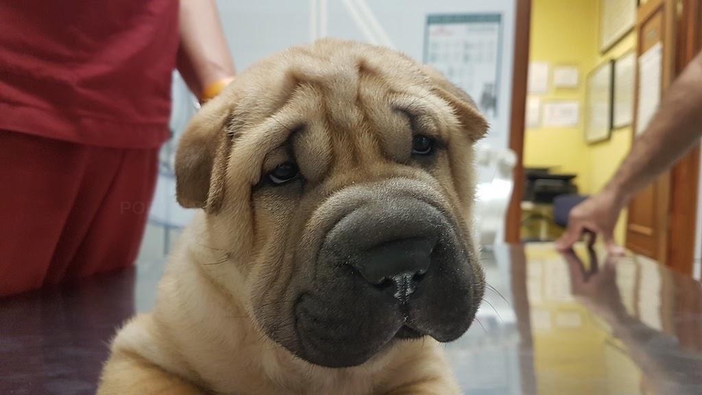 veterinario en tres cantos