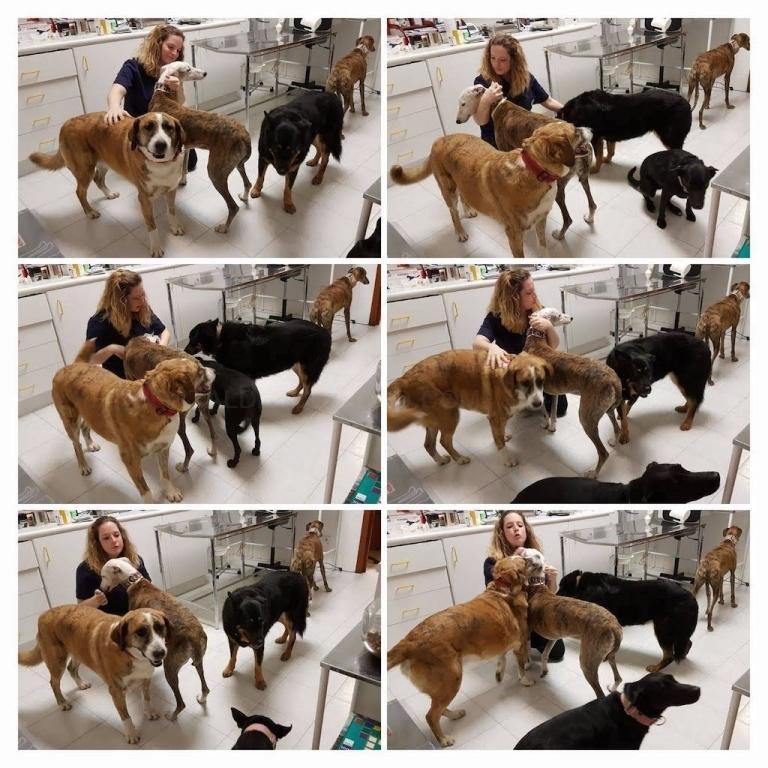 Ecografia veterinaria en tres cantos