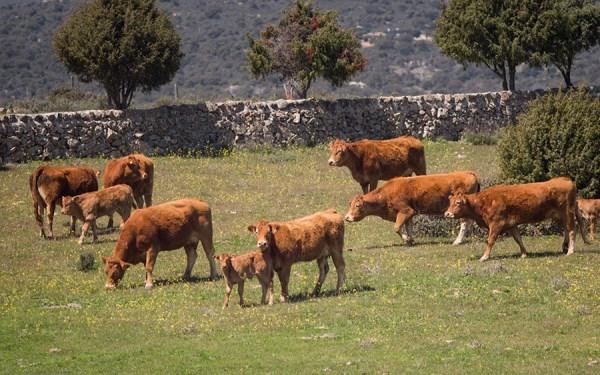 Policía Local finaliza con cero incidencias un Plan Especial de Vigilancia Rural