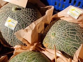El melón erizo triplica su producción un año después de incorporarse a la promoción de Sabores de Ibiza