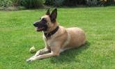 adiestrador canino en segovia, educador canino en segovia