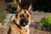 Adiestramiento de perros en Segovia,  Centros de tratamiento de conductas de perros