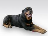 Adiestramiento canino en Segovia,  Segovia,adiestramiento de perros, adiestramiento canino, adiestrar perros, modificacion de conducta, educacion de perros, adiestramiento de cachorros, Segovia