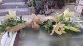 Abonos y fertilizantes, Flores y plantas