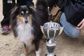 trofeos, agility