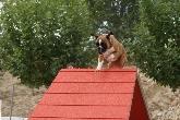 Adiestramiento canino en Brunete,  Brunete,adiestramiento de perros, adiestramiento canino, adiestrar perros, modificacion de conducta, educacion de perros, adiestramiento de cachorros, Brunete