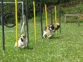 Centros de tratamiento de conductas de perros,  Adiestramiento canino en Navalcarnero