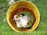 Adiestramiento de perros en Navalcarnero,  Centros de tratamiento de conductas de perros