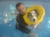 pose, Hotel guardería para mascotas