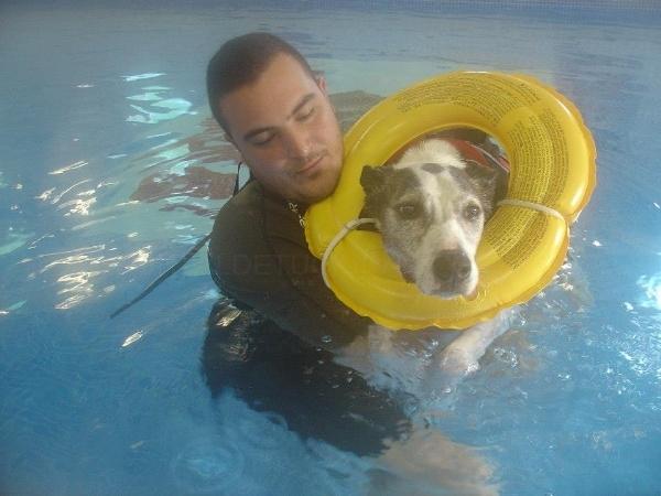 Escuela Canina Narub: Hotel para mascotas, residencia para mascotas, adiestramiento canino, obediencia canina, hidroterapia para perros , fisioterapia y rehabilitación perros y gatos