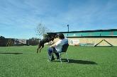 Transporte de mascotas, Animales de compañía