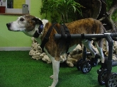 Hotel guardería para mascotas, Transporte de mascotas