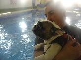 Animales de compañía, Adiestramiento de perros
