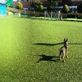 Hidroterapia, Hotel guardería para mascotas en Móstoles