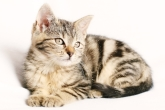 gatos navalcarnero