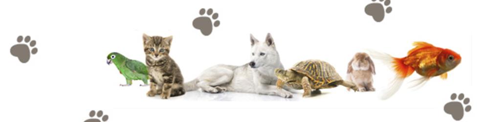 tienda de animales alcorcon