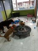 Animales de compañía, Comida para perros y gatos