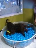 Tiendas de mascotas, Hotel guardería para mascotas en A Coruña