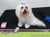 A Coruña, peluquerias caninas, peluquerias de gatos, peluquerias de animales, baño de animales, lavado de animales, aseo de animales, peluquerias de perros, baños de perros, A Coruña, , Peluquerías caninas