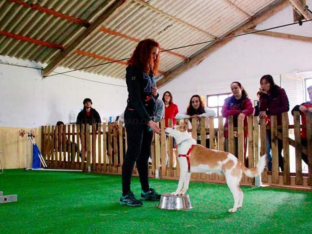 GUAU!: TIENDA DE MASCOTAS / ADIESTRADOR CANINO EN A CORUÑA