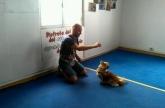 Tiendas de mascotas en A Coruña,  Artículos para mascotas, perros, gatos, pájaros, animales exóticos