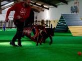 Animales en A Coruña, Adiestramiento de perros en A Coruña