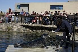 Alimentado focas en Aquarium Finisterrae, A Coruña