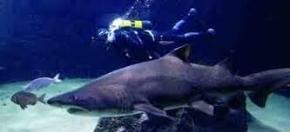 tanque de tiburones en Aquarium Finisterrae, A Coruña