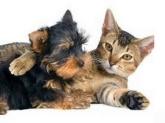 clinicas veterinarias alboraya, clinicas veterinarias tavernes blanques, microchip perros almassera