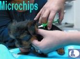 certificados animales tabernes blanques,  certificados animales almassera,  certificados animales