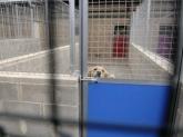 Hotel para perros La Pobla de Farnalls,  Hotel perros valencia