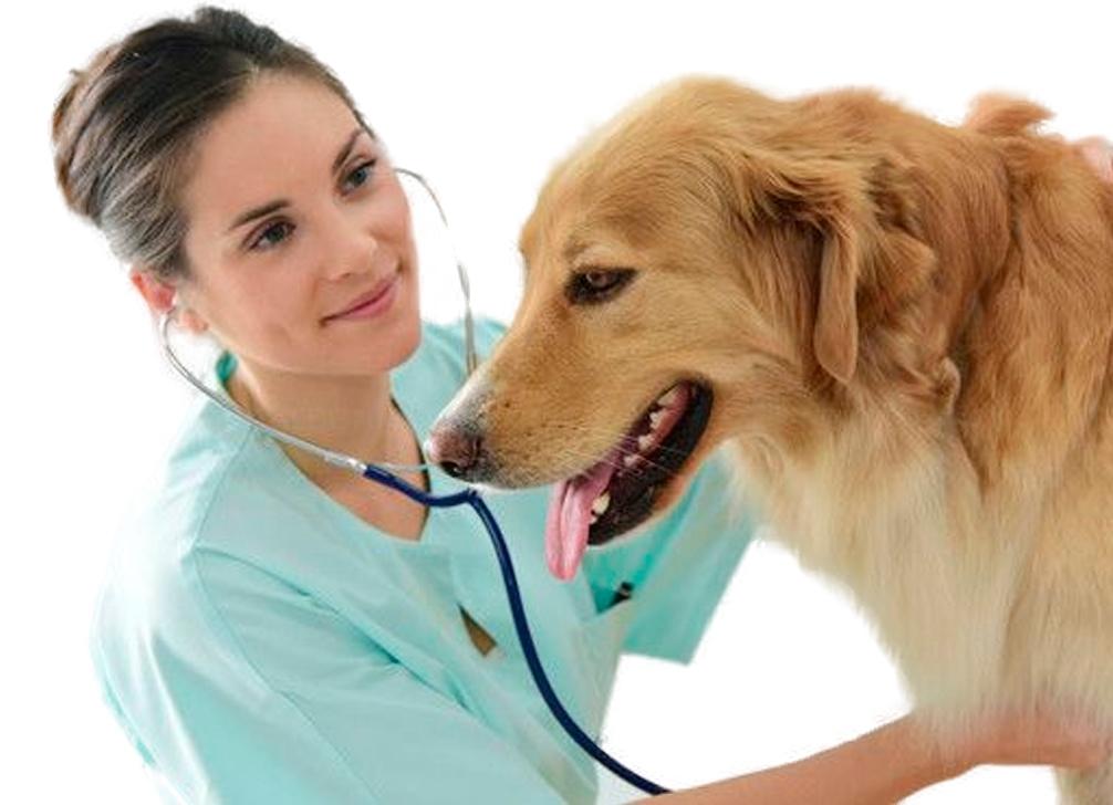 Veterinario en residencia canina valencia