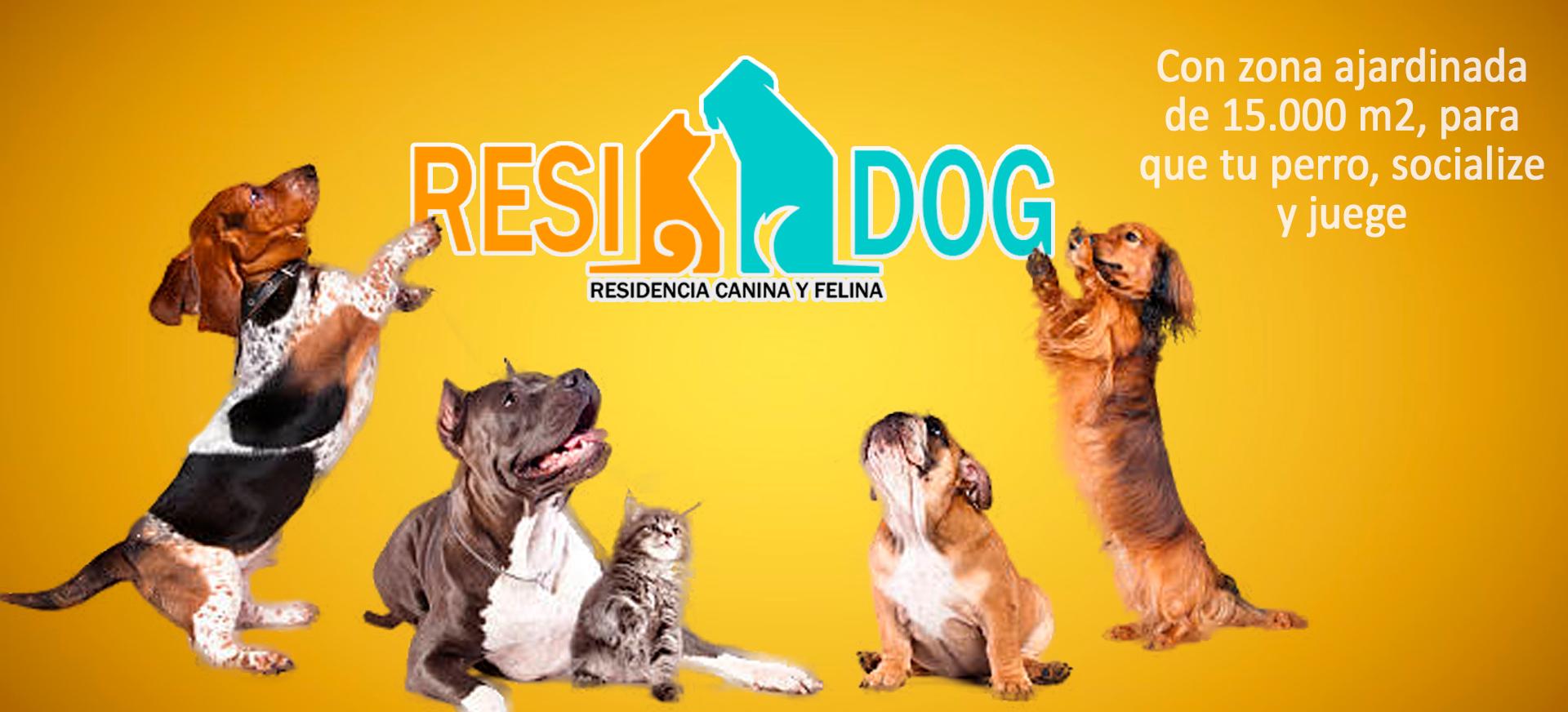 Hotel para perros Puzol, Hotel para perros El Puig, Residencia Cannina Valencia