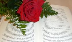 Las Bibliotecas Municipales celebran el Día Internacional del Libro fomentando la lectura y el amor a los libros