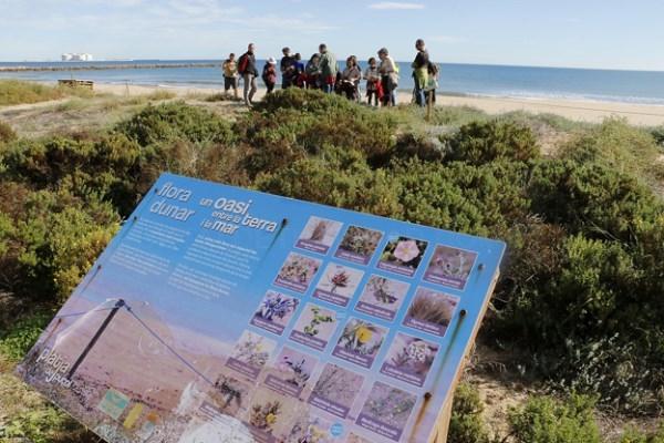 Comienza el «Otoño en la playa de Puçol» con una visita guiada a la zona de restauración dunar
