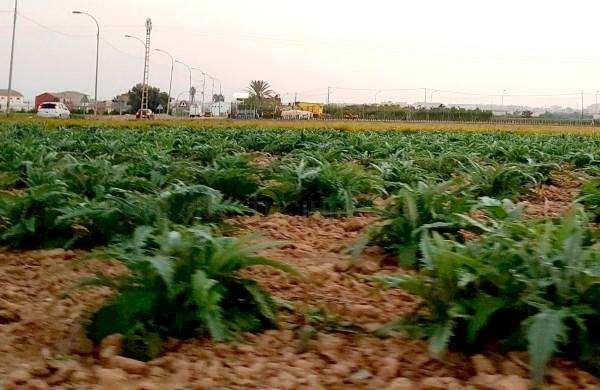La UE aprueba el proyecto de cooperación territorial Valsipam en el que participa como socio el Consorcio del Consell de l'Horta de València