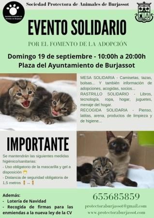 La Protectora de Animales de Burjassot vuelve a buscar la solidaridad ciudadana con un nuevo evento en la Plaza del Ayuntamiento