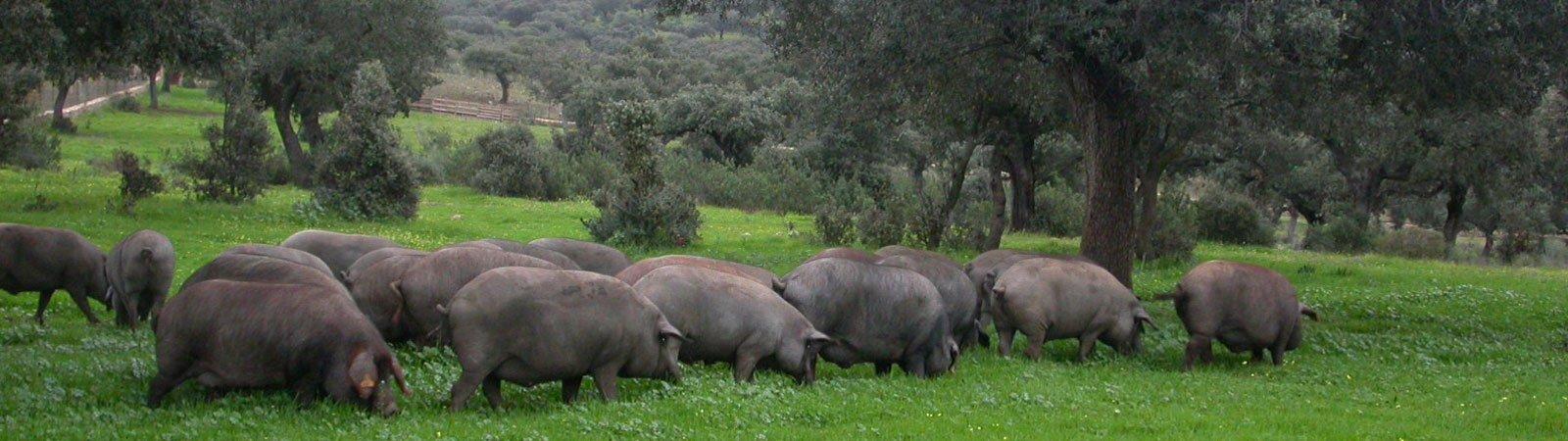 productos extremeños en vallecas, productos de la tierra en vallecas, alimentación en vallecas
