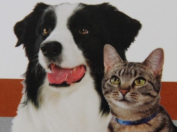 Consulta veterinaria en Rincón de la Victoria