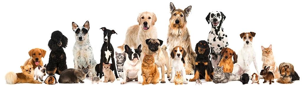 Análisis para mascotas en Rincón de la Victoria