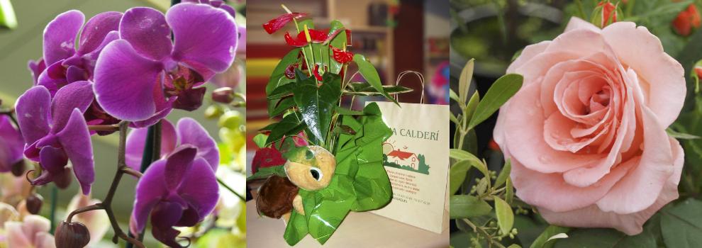 viveros flores plantas